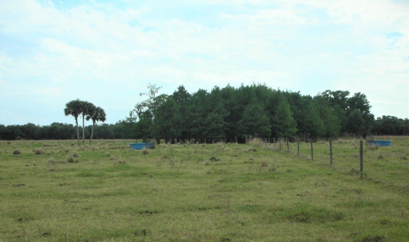 Cypress Head on Property