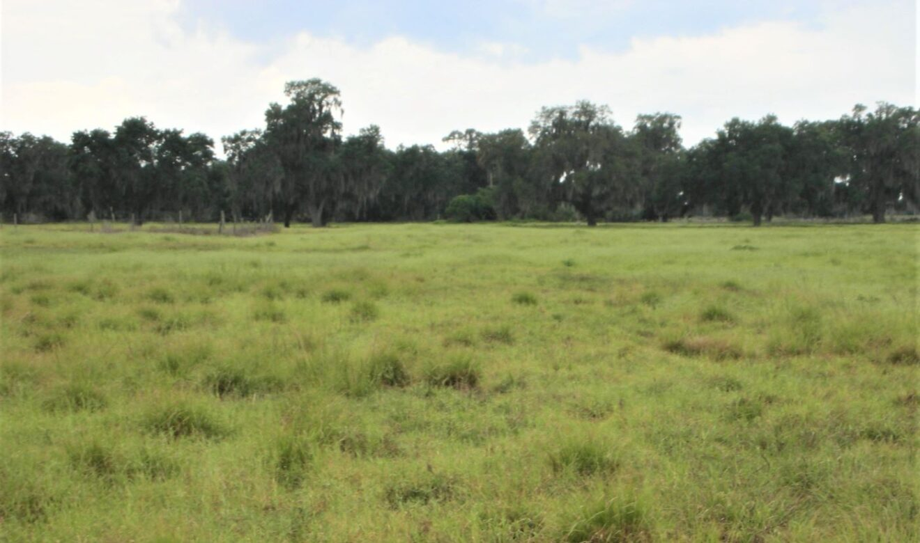 Open Pasture with Nice Oaks