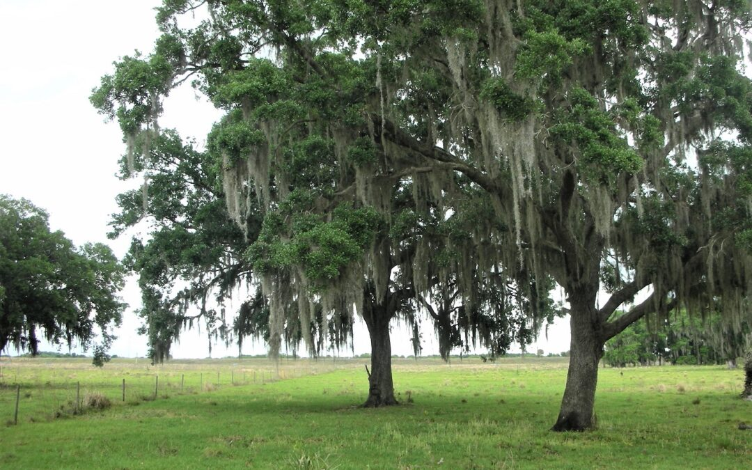 Okeechobee's Newest and Best Ranch Properties